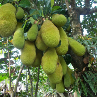 5 Amazing Health Benefits of Jackfruit